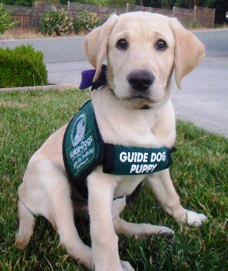 guide_puppy